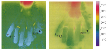 Thermo photograph of a hand in cold water without Ginkgo