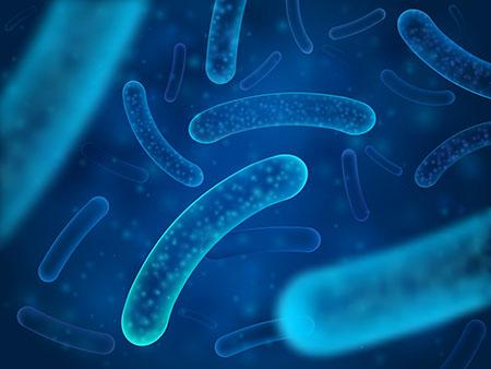 Melkesyrebakterie av typen Lactobacillus Acidophilus