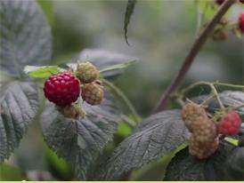 Suplementy diety o potwierdzonej biodostępności